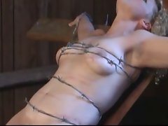 tied with barbed wire, crushing soft tit and snatch meat